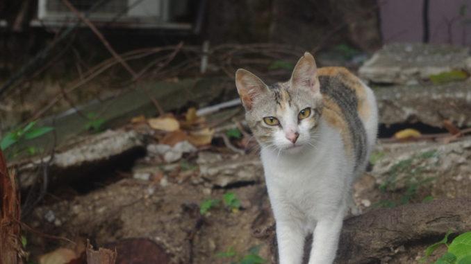 猫に会えるスポット:マカオのローカル村&リゾート地コロアン