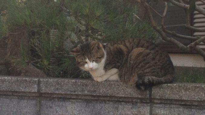 猫に会えるスポット:神奈川県・真鶴