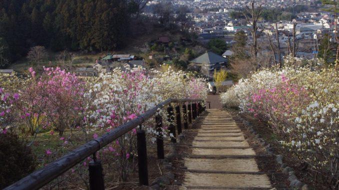 梅の公園・梅まつり