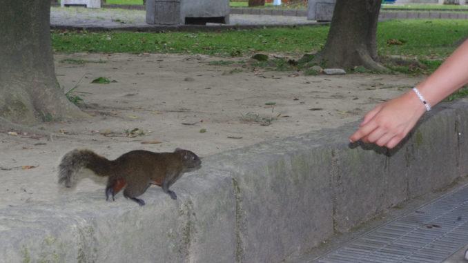 台北フリーウォーキングツアー・公園内のリス
