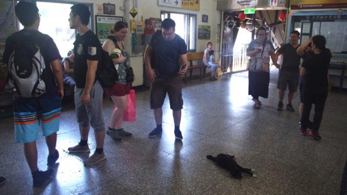猫村の猴硐駅:猫と触れ合うことができる
