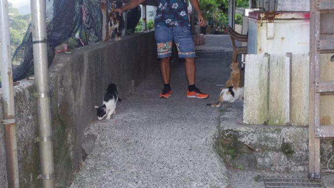 猫村の住人と猫(台湾・猫村の民家とお土産店通り)
