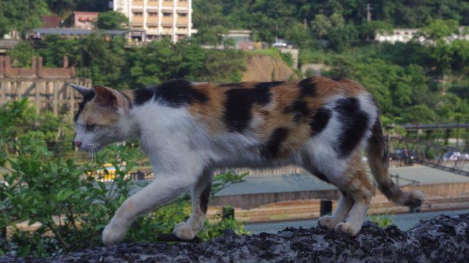 台湾・猫村の猫と豊かな自然