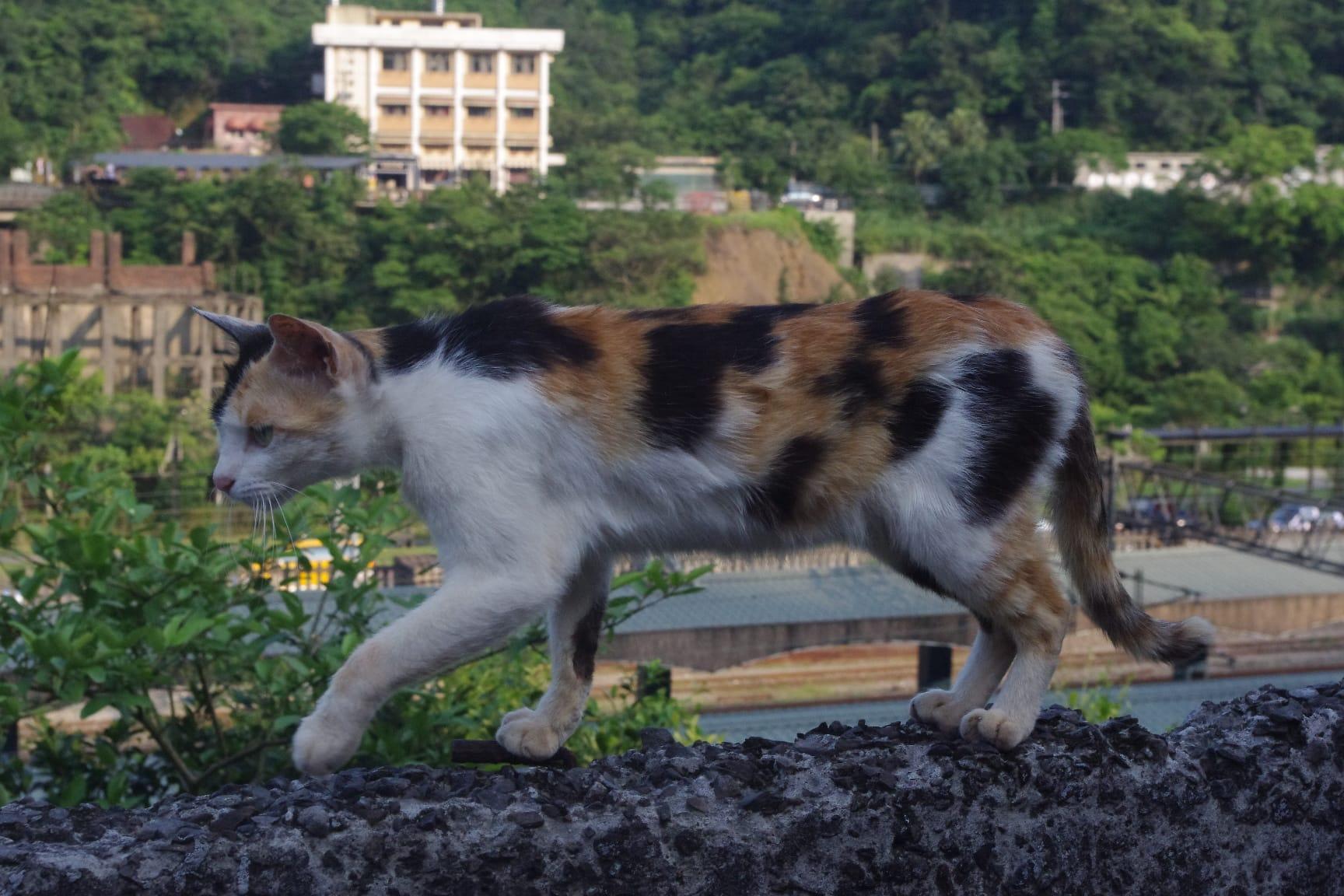 台湾の猫村「猴硐(ホウトン)」と猫