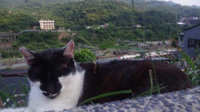 高台になっている猫村の、リラックスした猫と自然