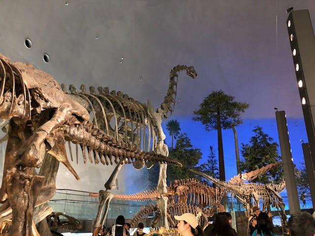 恐竜博物館 実物大の骨格標本
