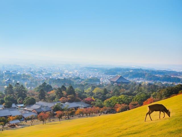 奈良・若草山と鹿