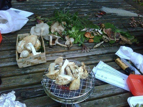 Mushroom hunt meetup in Kamakura by Japanize