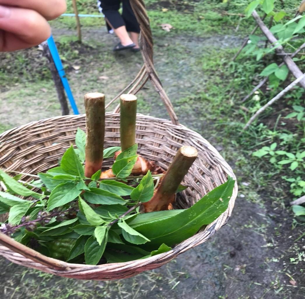 タイ・チェンマイの料理教室/クッキング体験:料理教室の畑のショウガ