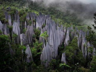 グヌン・ムル国立公園(マレーシア・サバ州/ボルネオ島)
